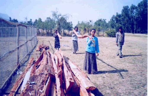 teenagers bring wood