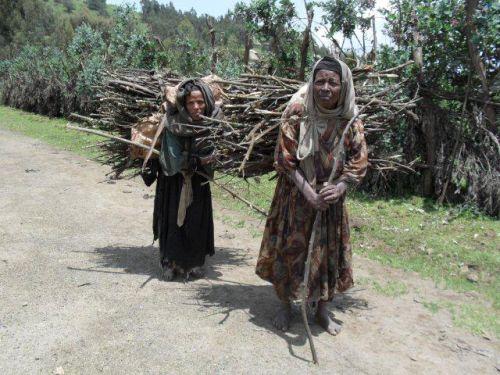women bringing firewood to Debark