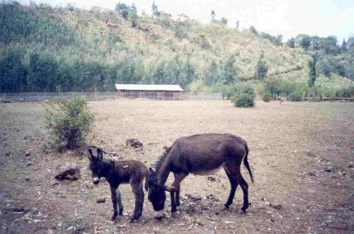 Gedelitu with Yetengirt (at eight days old) - Empress Mentewab School (under construction) is in the background