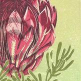 proteus bouquet