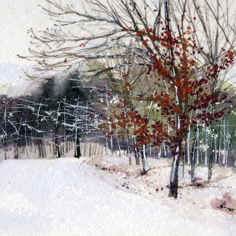 Frosty Beeches