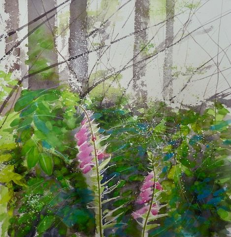 SOLD - Foxgloves - shady woodland, Bowood, Wiltshire