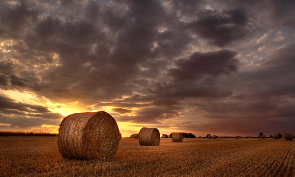 Three Bales