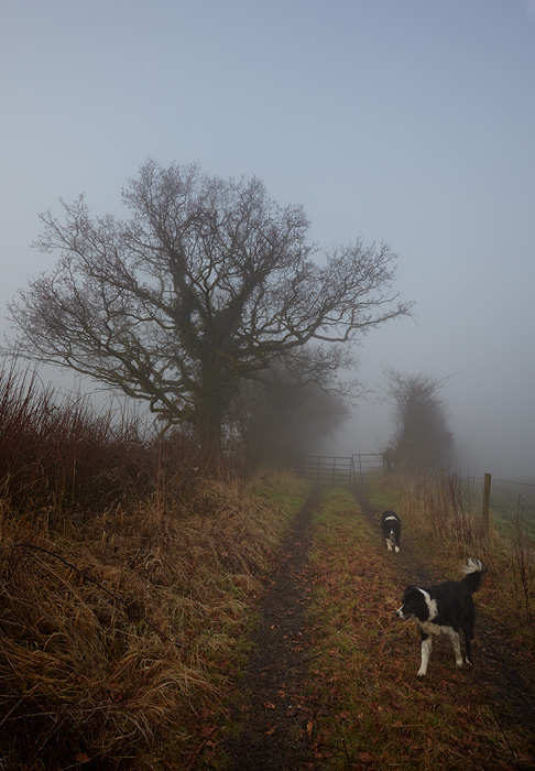 A Foggy Walk