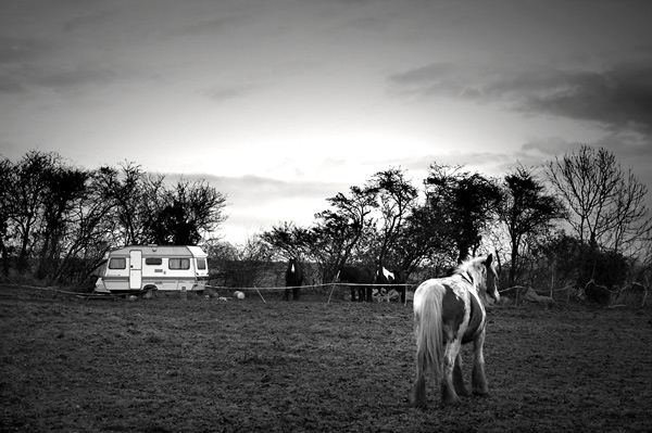 Coloured Cobs & Caravan