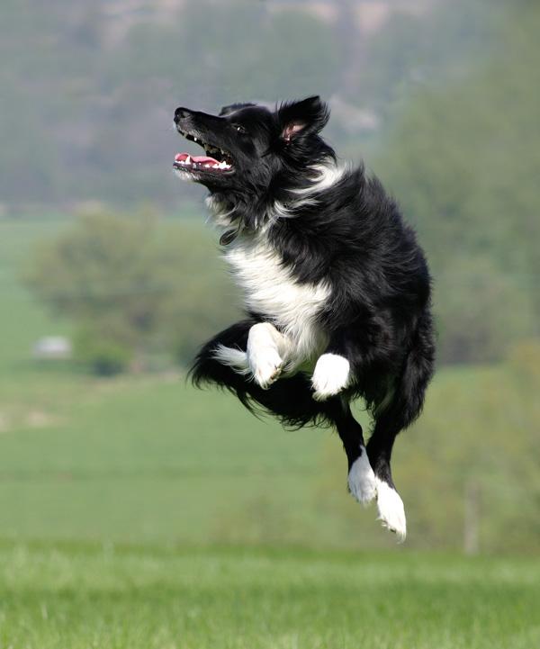 Jumping Jet