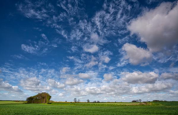 Spring Farmland