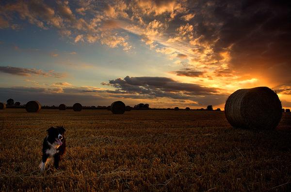 Dog and Bale