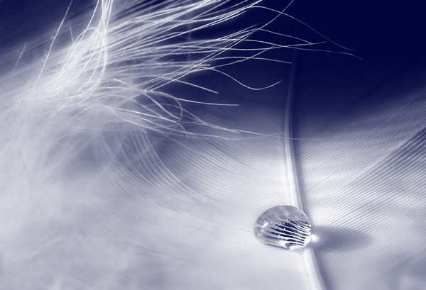 Feather Droplet