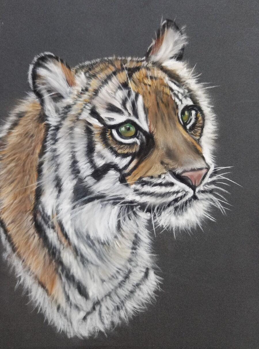 Sumatran Tiger4