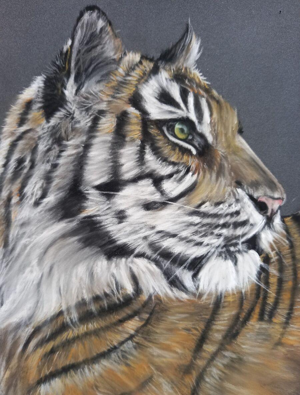 Sumatran Tiger5