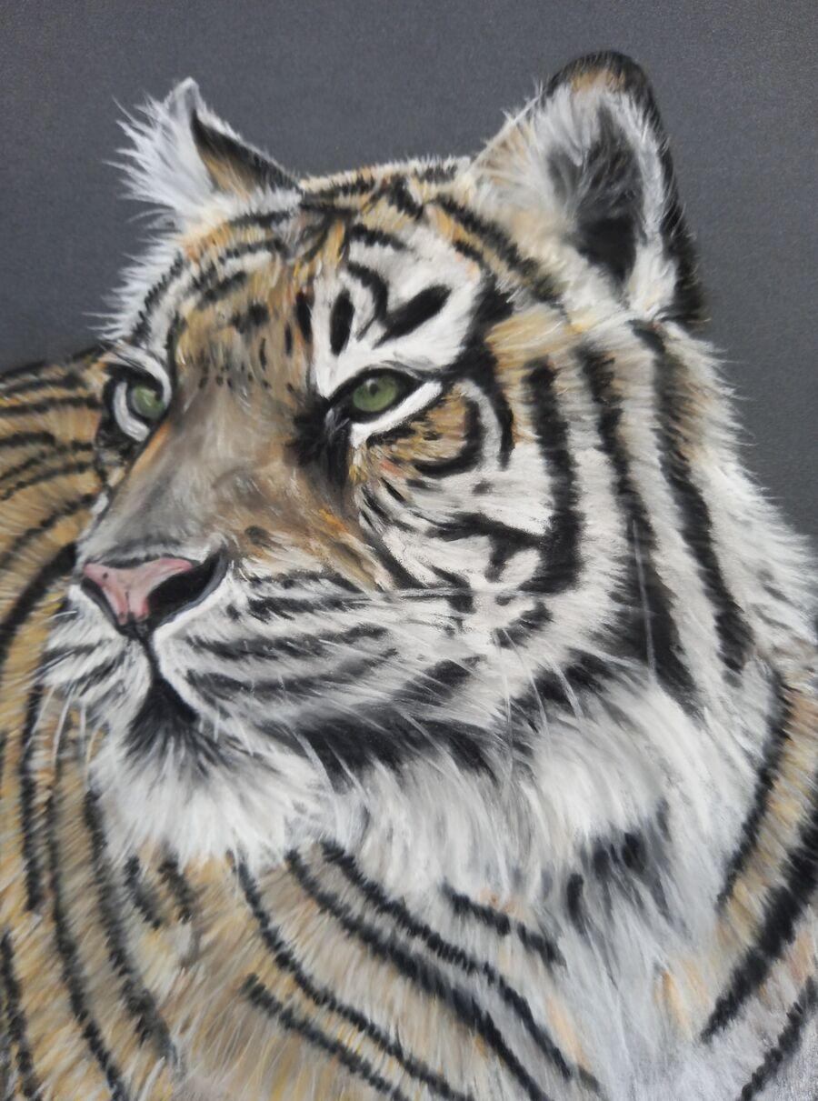 Sumatran Tiger6