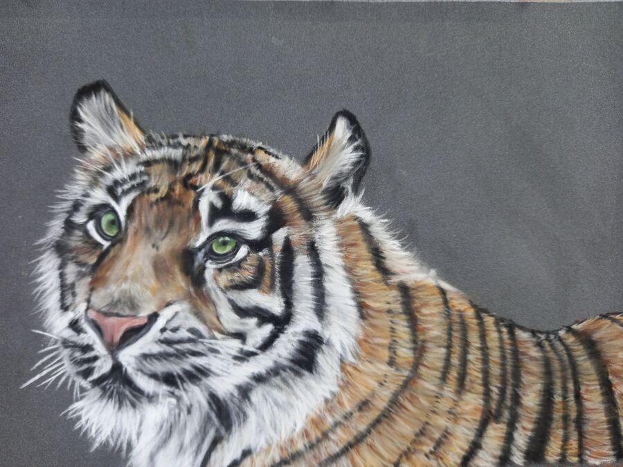 Sumatran Tiger3