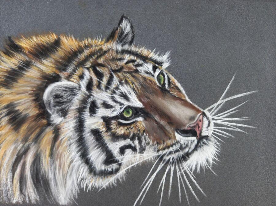 Sumatran Tiger2