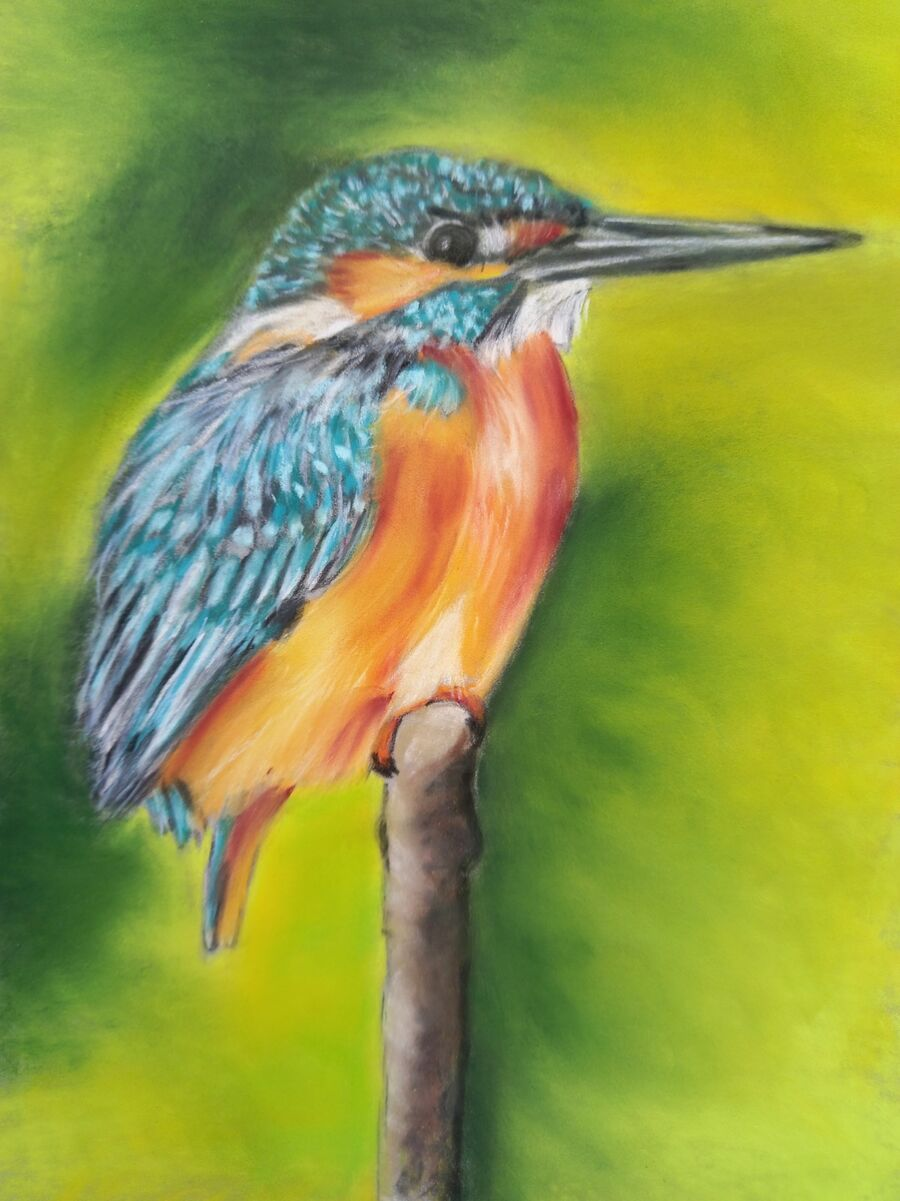Kingfisher2