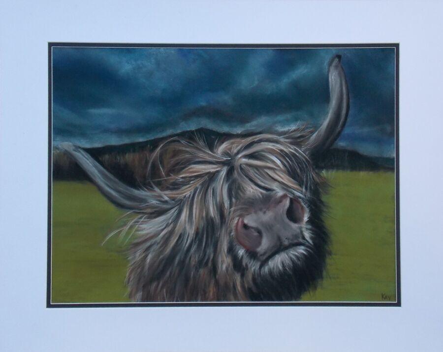 Highland Cow - 2