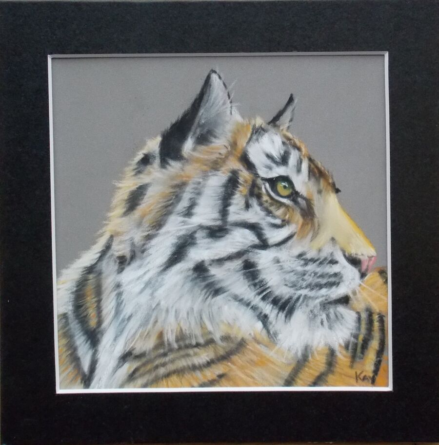 Sumatran Tiger7