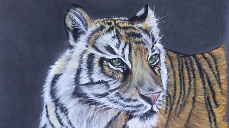 Sumatran Tiger1
