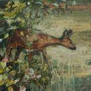 The Shy deer
