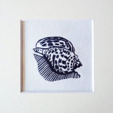 Seashell I