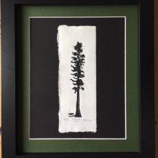 ponderosa pine framed