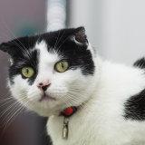 Cat-A-Tonic Cat Cafe, Oldham