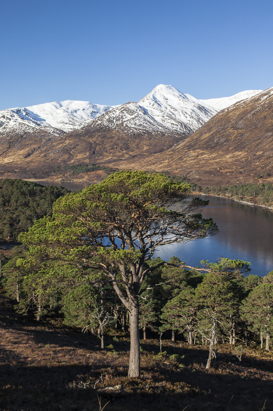 An Tudair overlooking Loch Affric