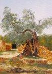 Ancient Olive Tree, Old Karavomilos, Kefalonia - SOLD