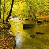 River Teign 1