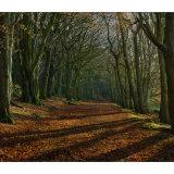 Calverly Woods
