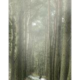 Tall Misty Trees