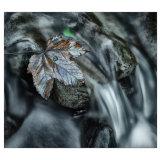 Still Leaf