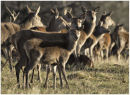 Deer crowd