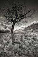 Glen Tree