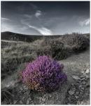 Horcum heather