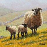 Hillside Lambs