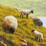 County Antrim Trio