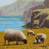 Coastal Sheep