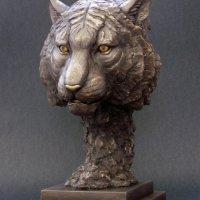 Tiger, Majestic