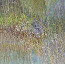Perennial Border in June