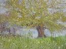 Crack Willow - Dedham
