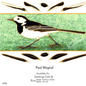 Pied Wagtail  from a painting by Janet Wheeler