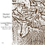 Sheep Herded Together