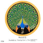 Peacock (1)