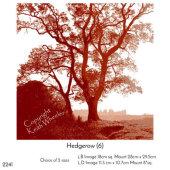 Hedgerow (6)