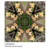 CHICKENS  (Kaleidoscope photograph)