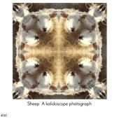Sheep (Kaleidoscope Photograph)