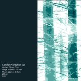 Conifer Plantation (1)