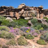 Bushman's Kloof Game Reserve