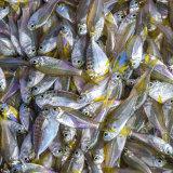 """""""Chinese Fishermens' Market"""" : Cochin"""
